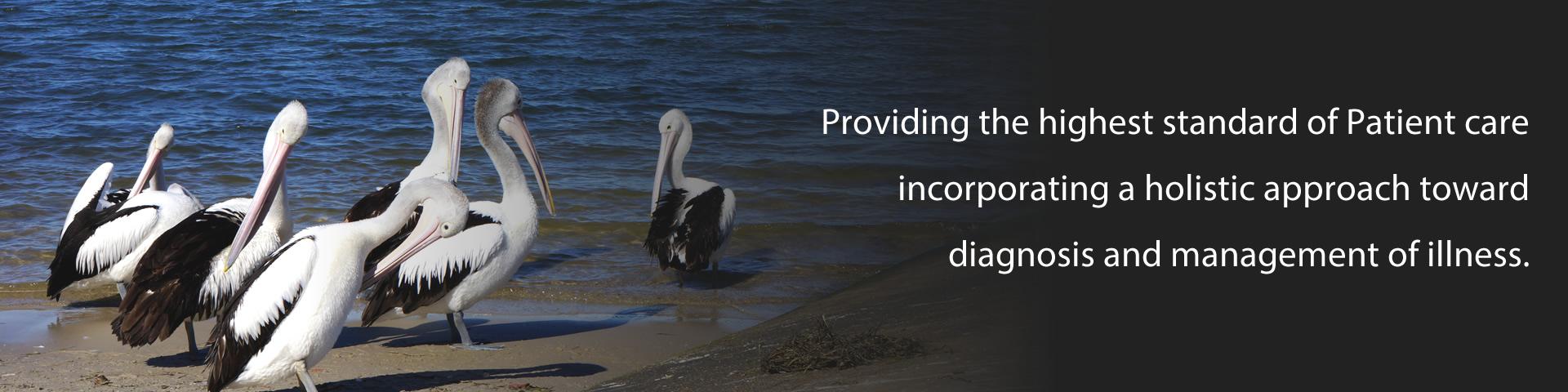 Slider Pelicans